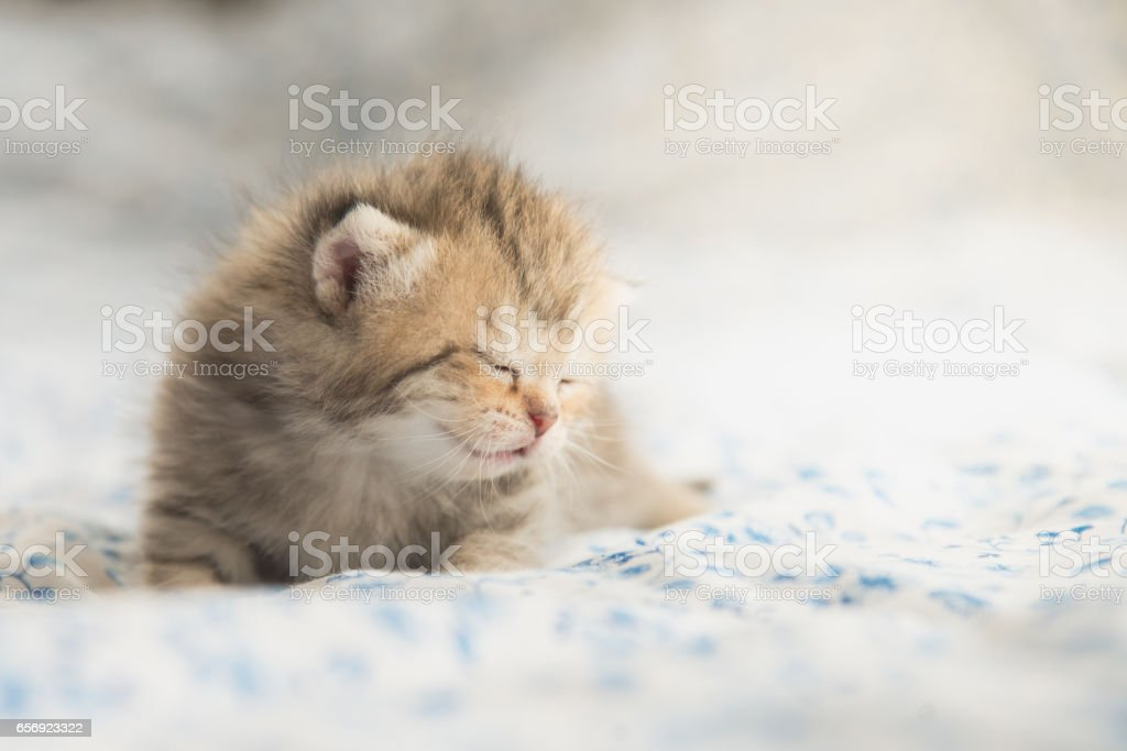 Cute tabby kittens sleeping stock photo