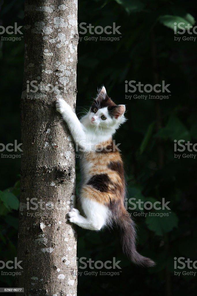 Cute three colored kitten climbing on the tree stock photo