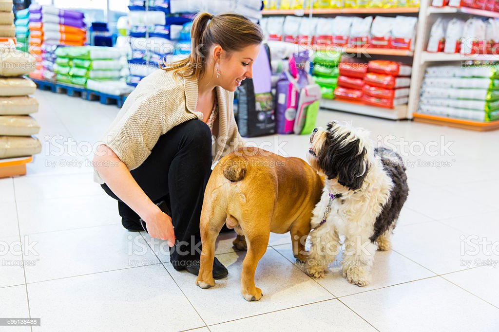 Cute Tibetan Terrier and English Bulldog in pet store.. stock photo