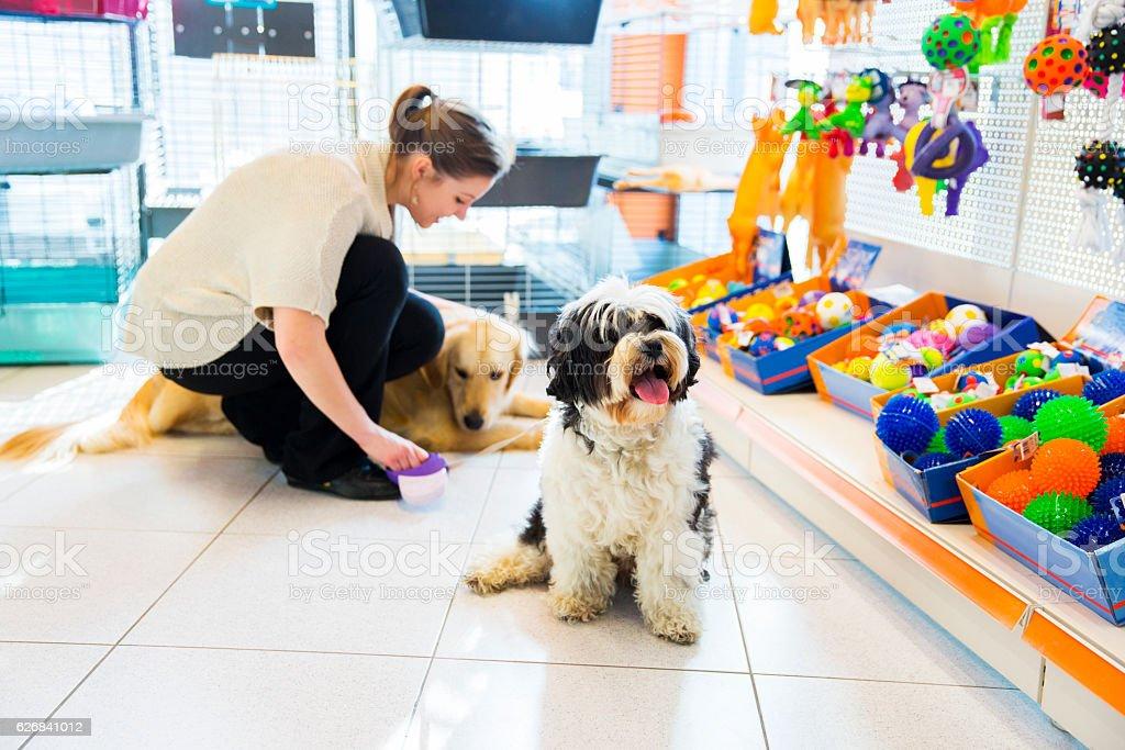 Cute Tibetan Terrier and Golden Retriever in pet store resting stock photo