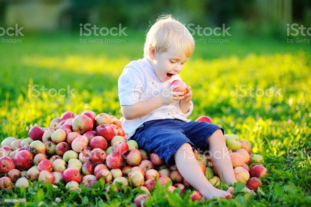 Cute toddler boy eating ripe apple in garden stock photo