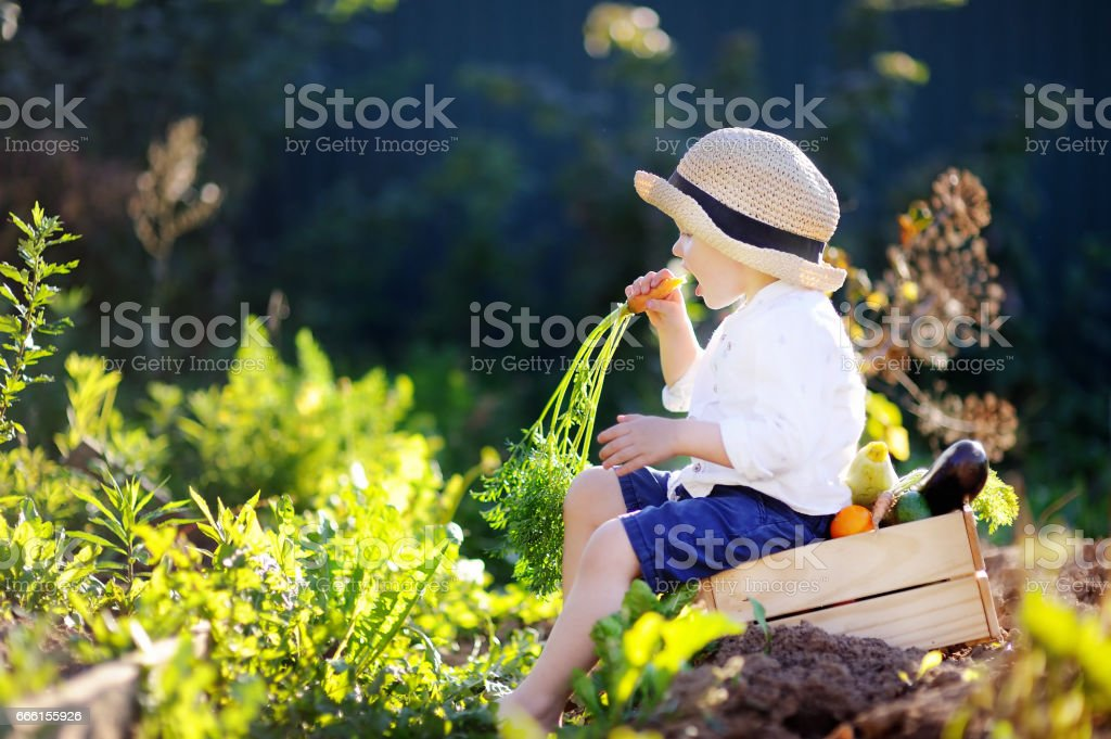 Cute toddler boy showing fresh organic carrot stock photo