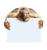 Cute turtle holding  a blank white board