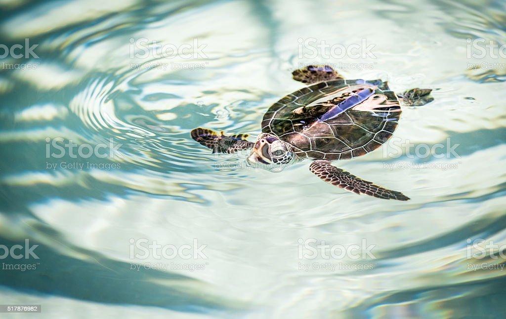Cute Turtle stock photo