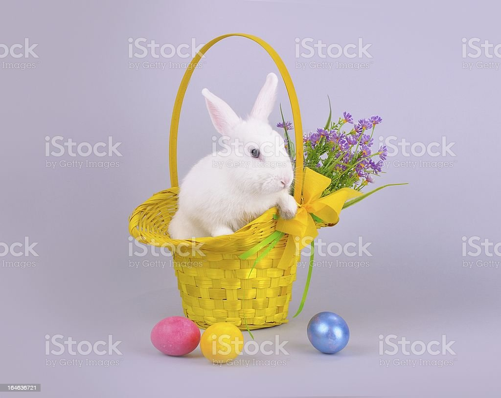 Cute white bunny in a basket, flowers and Easter eggs royalty-free stock photo