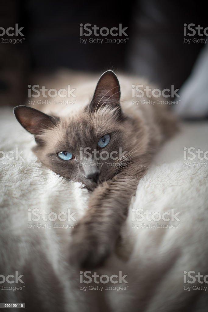Cute white cat stock photo