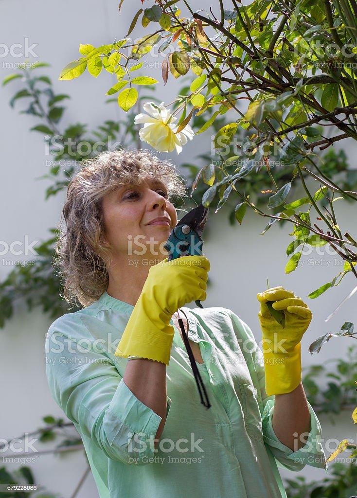 Cute woman workts with pruner in her garden stock photo