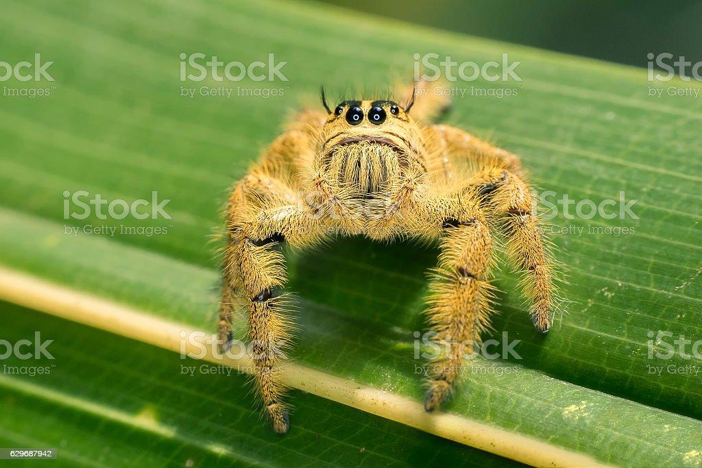 Cute yellow spider stock photo