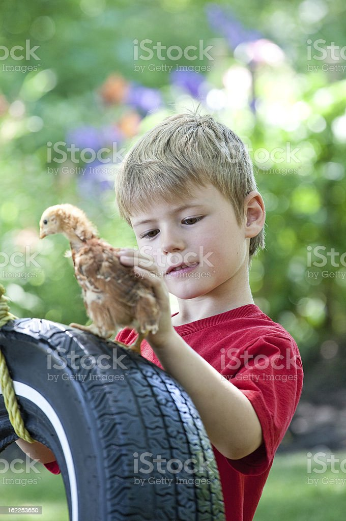Young Boy With Baby Chick stock photo