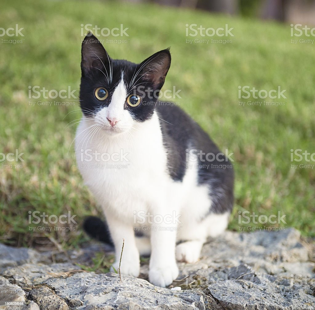 Cute Young Cat stock photo