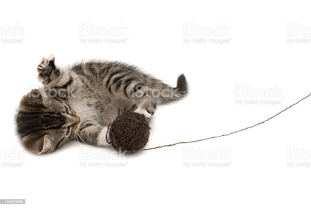 Cute young cat when show royalty-free stock photo