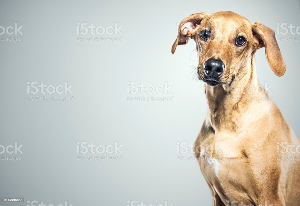 Cute Young Dog stock photo