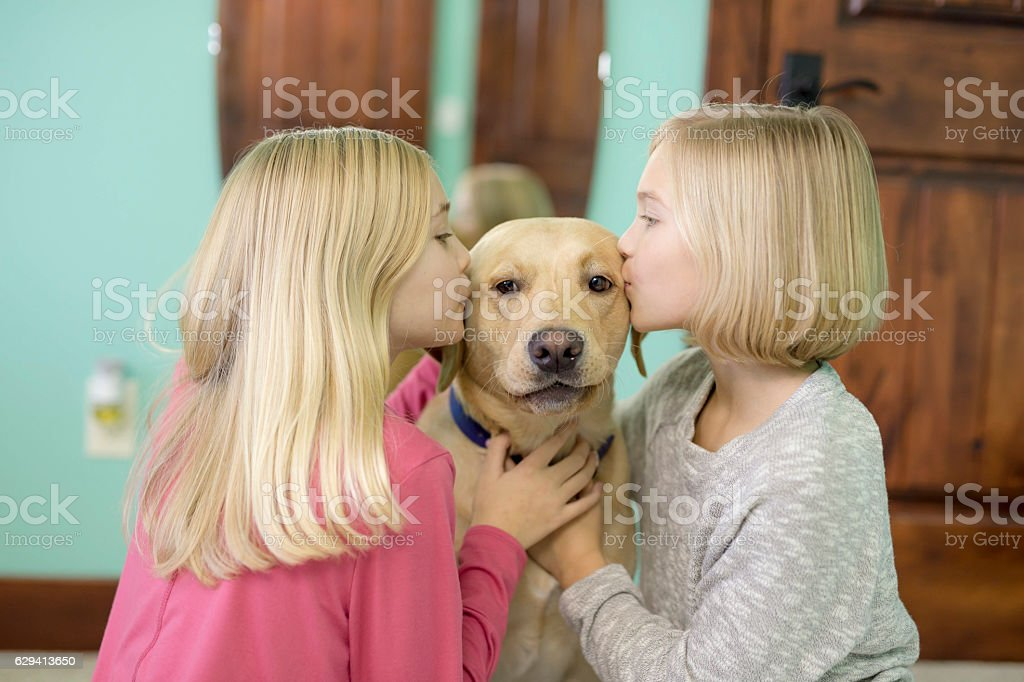 Cute young girls kissing their yellow labrador dog stock photo