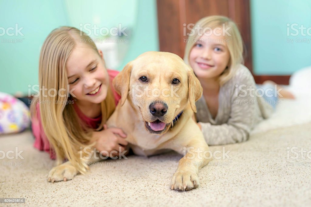 Cute young sisters playing with their pet dog at home stock photo