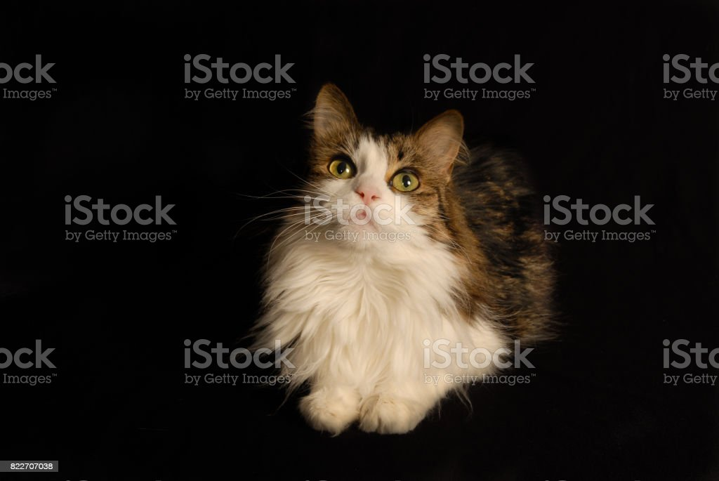 Cuteness stock photo