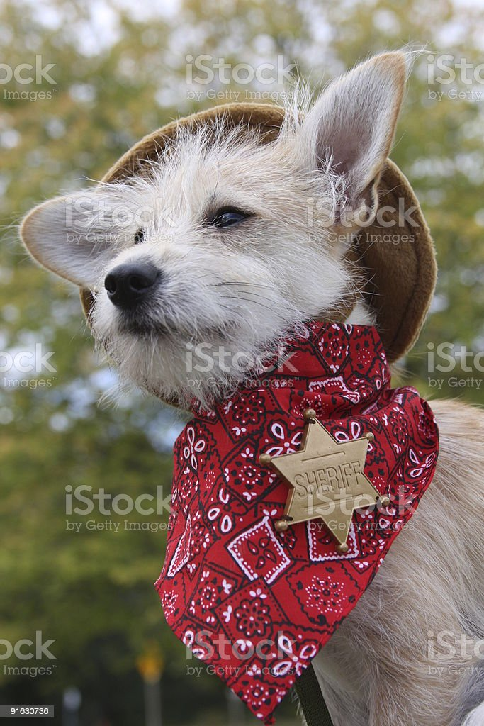 Cutest Sheriff in town! royalty-free stock photo