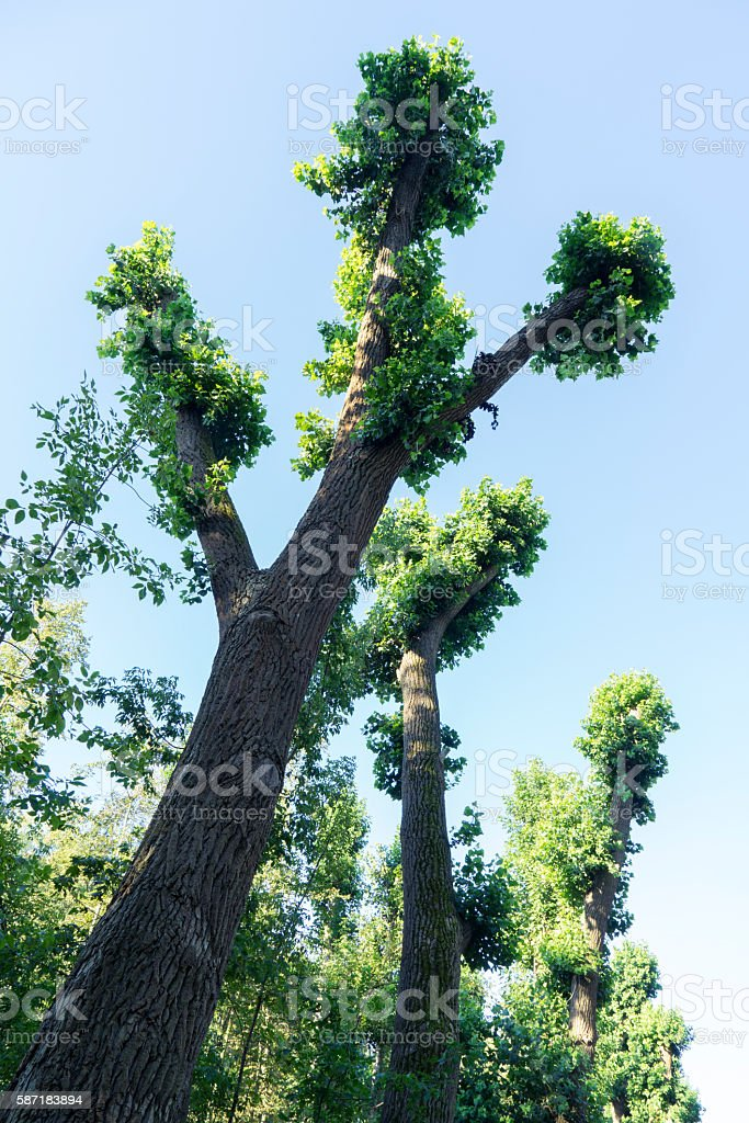 cuts trees stock photo