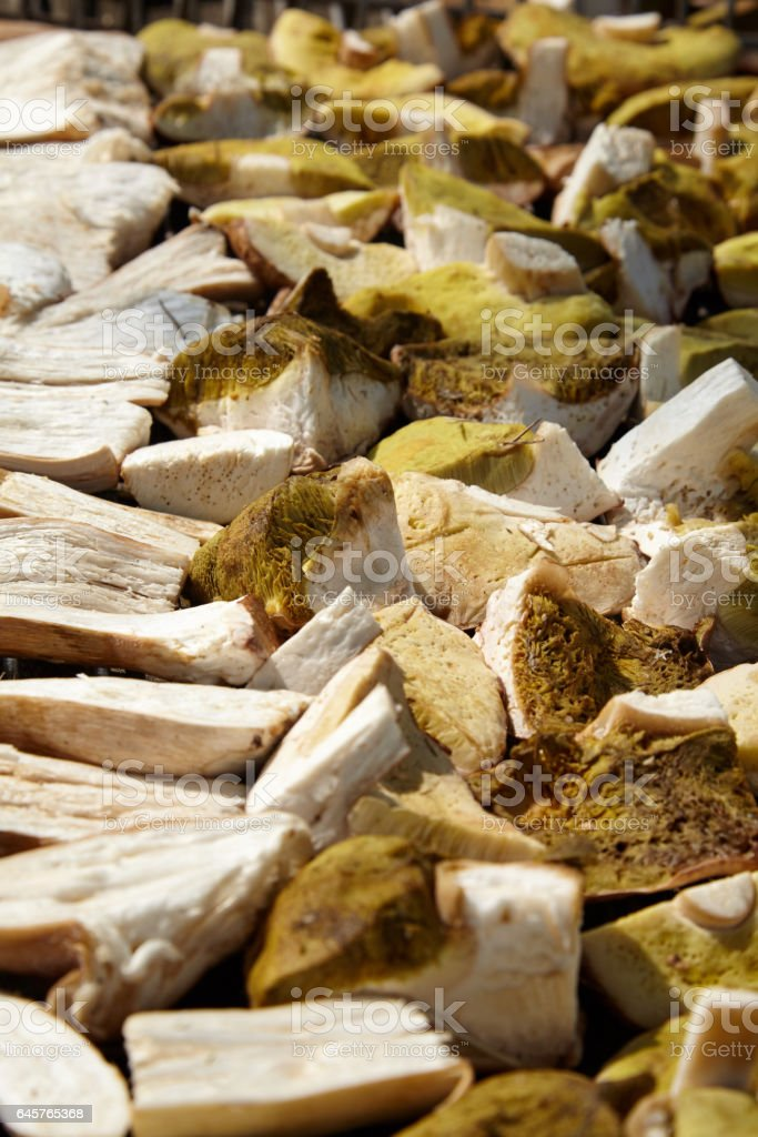 Cutted wild mushroms lying on the dry tray stock photo