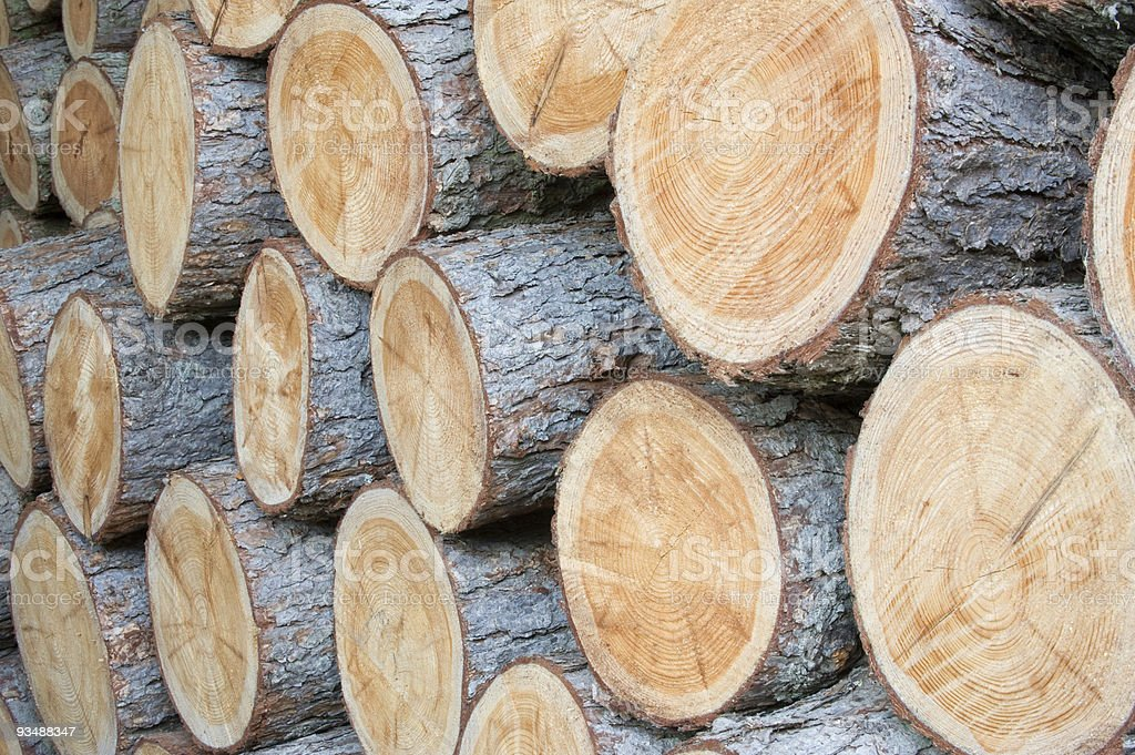 Cutted wood stock photo