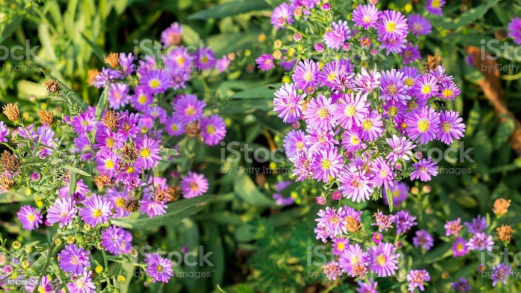 Cutter Blumen Lizenzfreies stock-foto