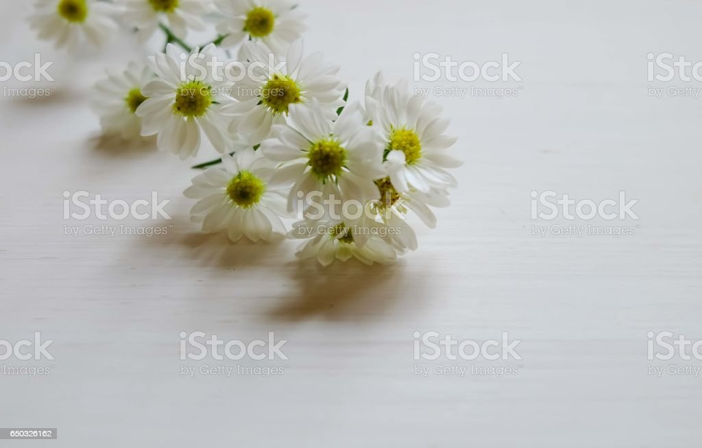 'cutter '   The little flower so cute on white background and space stock photo