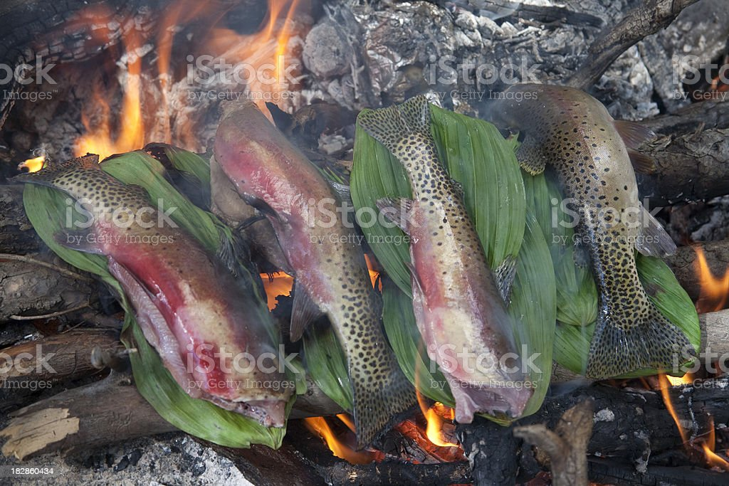 Cutthroat Trout Roasting on an Open Campfire royalty-free stock photo