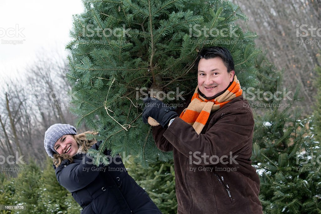 Cutting a Christmas tree royalty-free stock photo