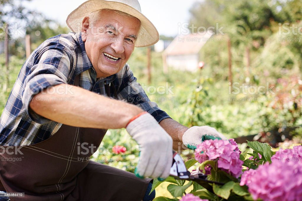 Cutting a flowers for my wife stock photo