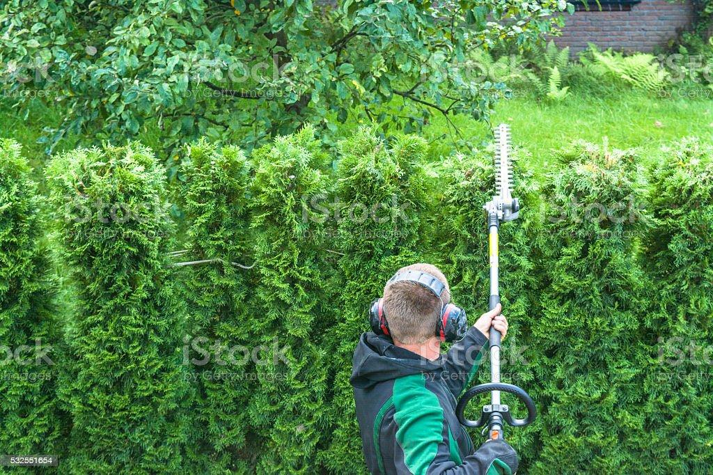 Cutting a hedge stock photo