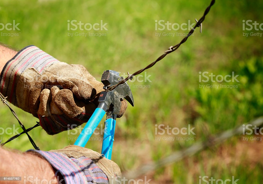 Cutting barb wire stock photo