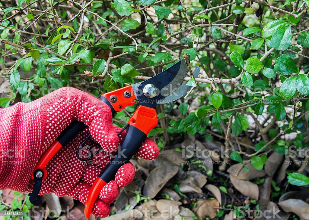 cutting branches. stock photo