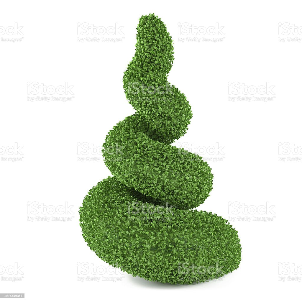 cutting bush in the form of a spiral stock photo