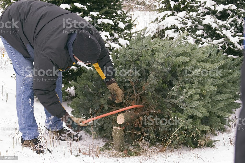 Cutting down the Christmas tree stock photo
