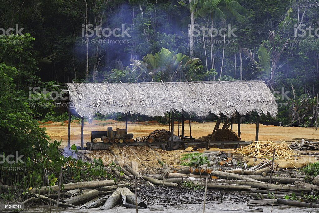 Cutting Down the Rain Forest royalty-free stock photo
