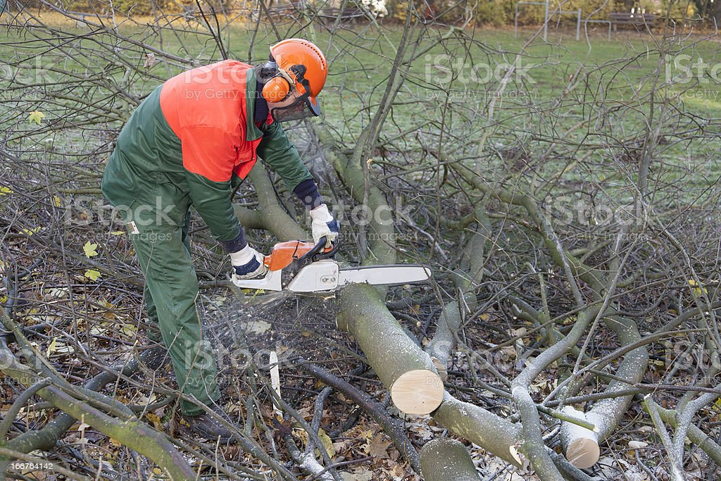 cutting firewood royalty-free stock photo