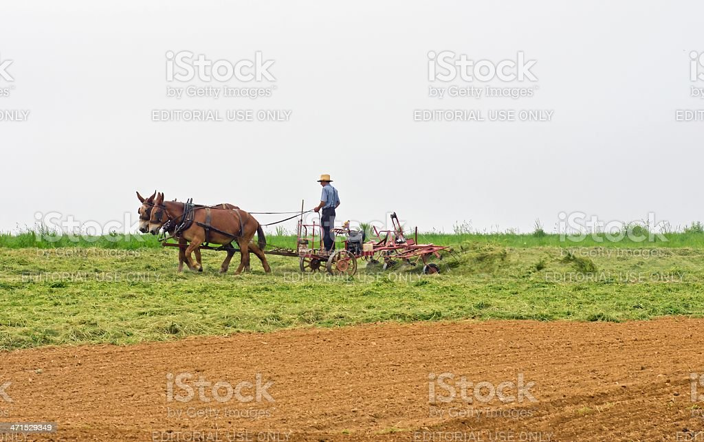 Cutting Hay royalty-free stock photo