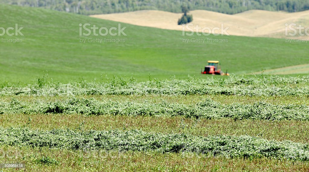 Cutting hay stock photo