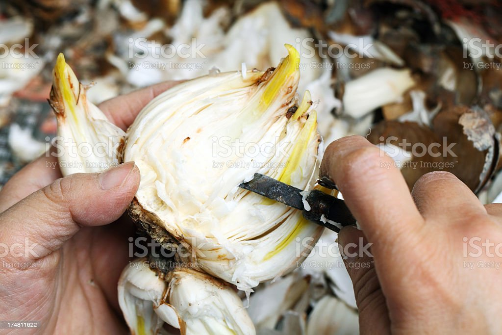 cutting narcissus bulb stock photo