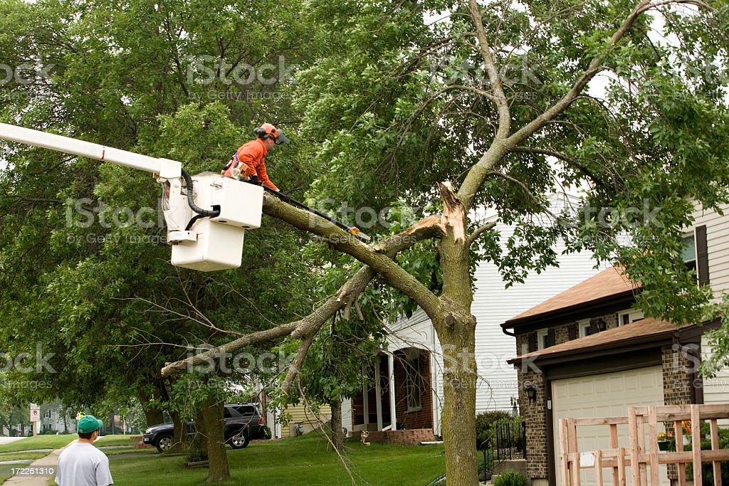 cutting storm damaged tree royalty-free stock photo