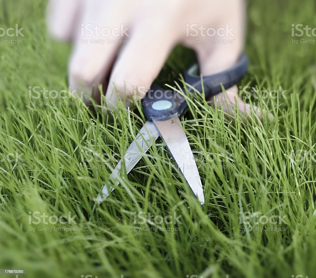 Cutting the grass with a pair of scissors royalty-free stock photo