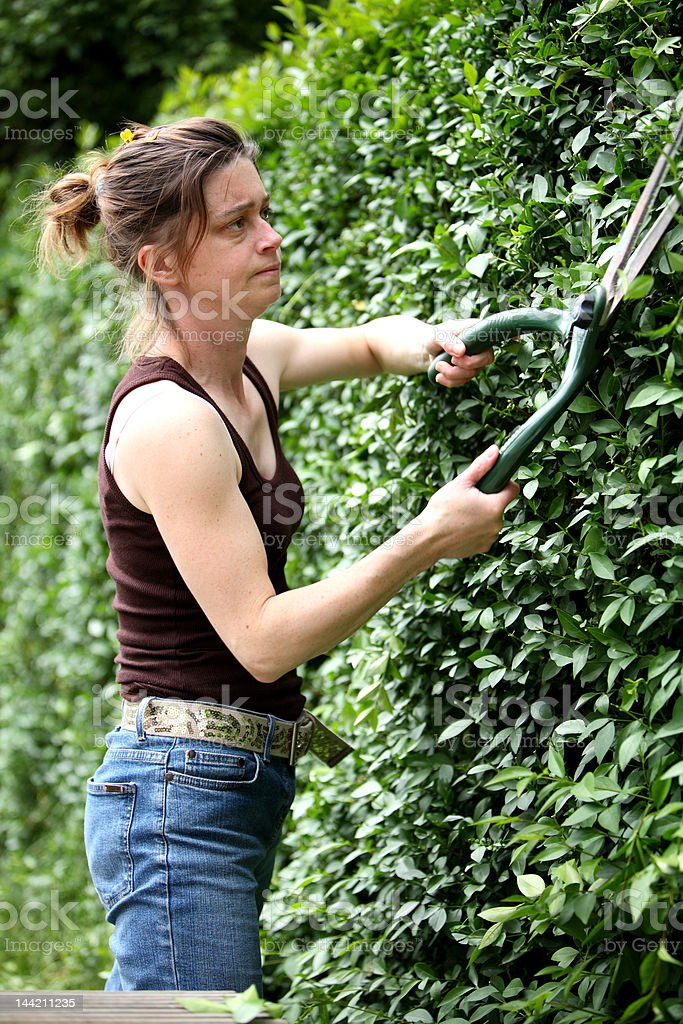 Cutting the hedge royalty-free stock photo