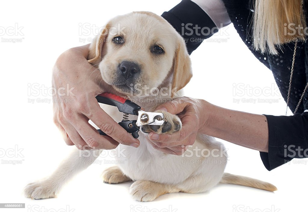 cutting the nails stock photo