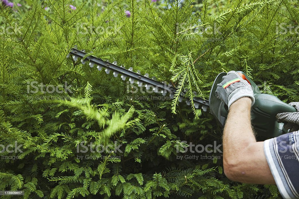 Cutting the trees # 8 XXXL stock photo