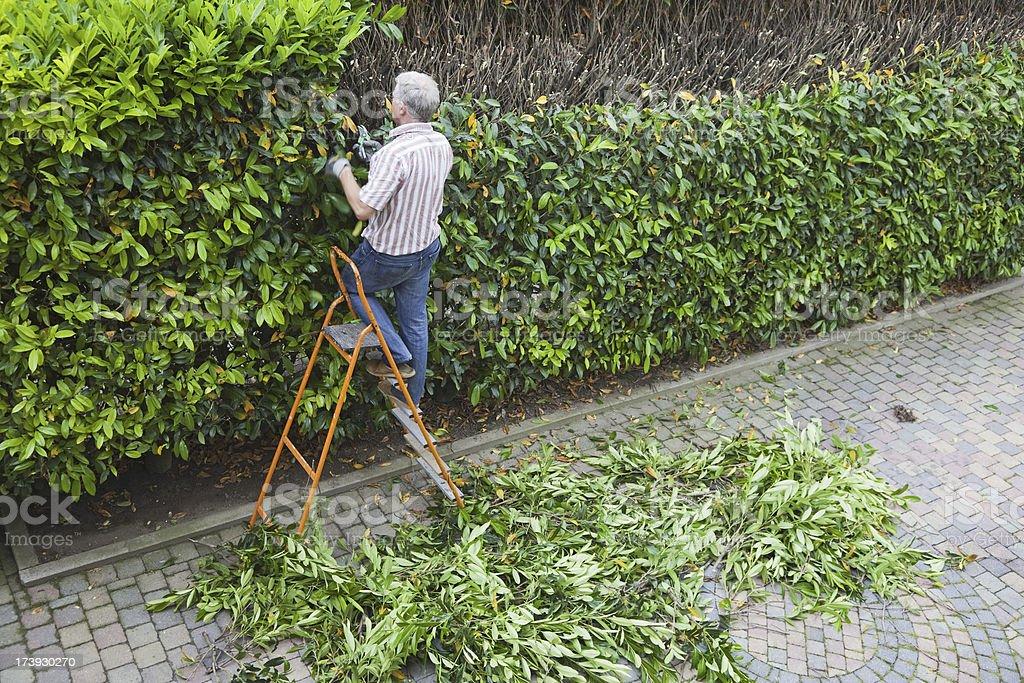Cutting the trees # 6 XXXL stock photo