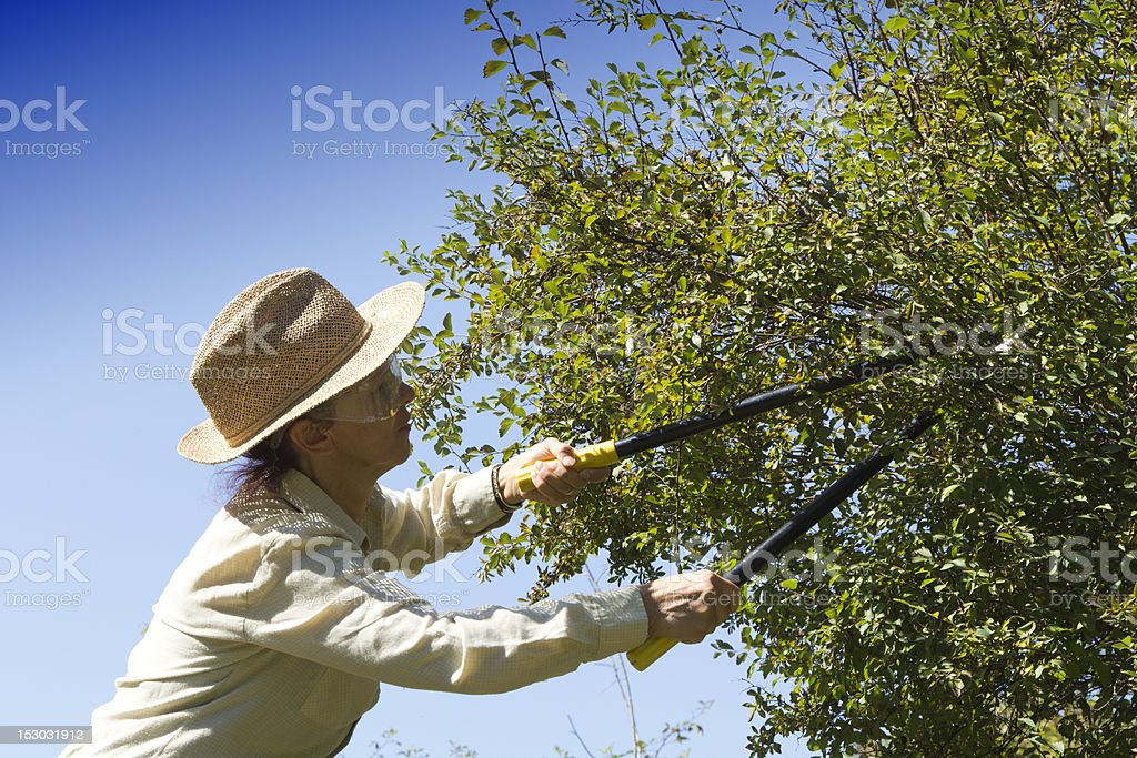 Cutting tree branches and hedge stock photo