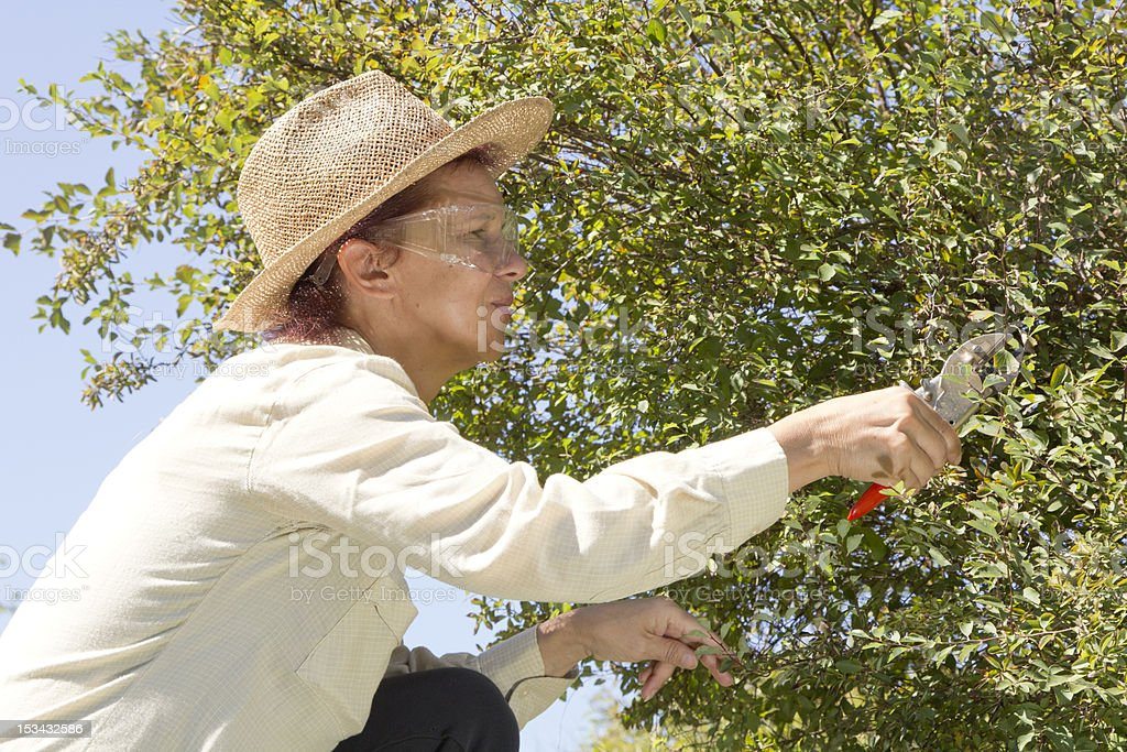 Cutting tree branches and hedge royalty-free stock photo