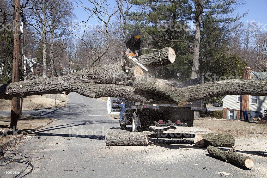 Cutting tree stock photo