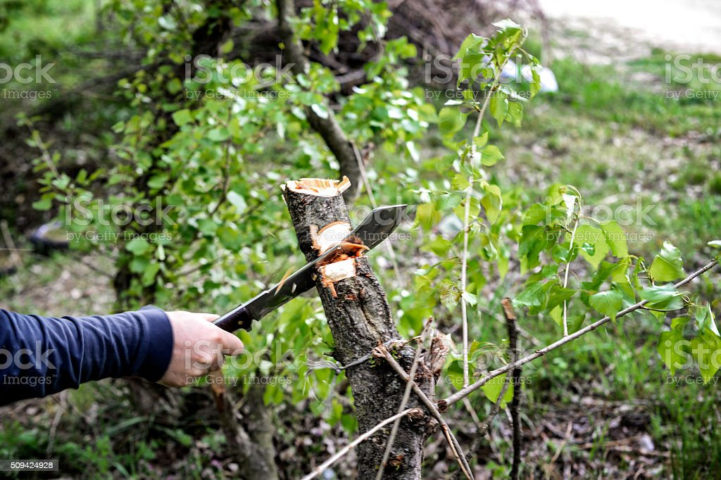 Cutting wood with machete stock photo