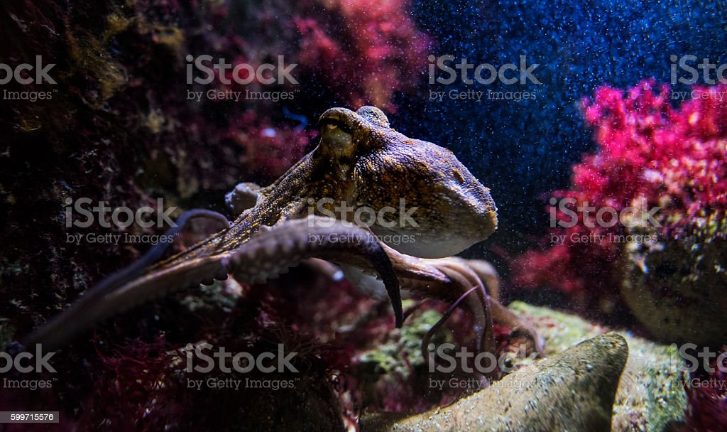 cuttlefish underwater, sea life background stock photo