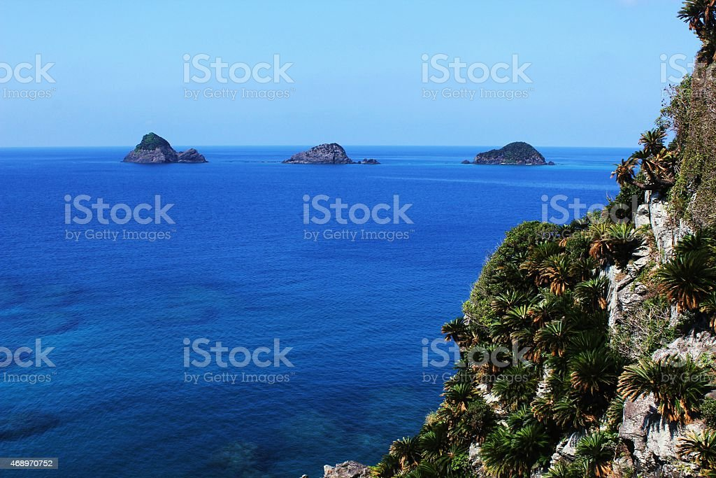 Cycad and sea stock photo